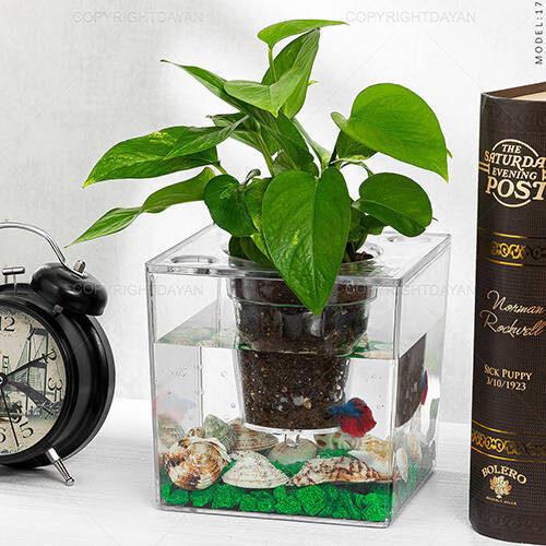گلدان آکواریومی Selin مدل 17888 - تنگ پلنت پلکسی گلس