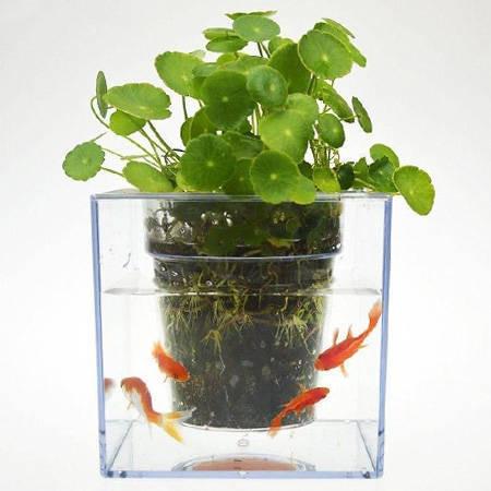 گلدان آکواریومی سون گرین - تنگ ماهی و گلدان 7Green